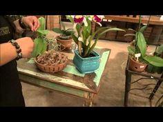 ▶ Aprenda como cultivar a sua própria orquídea! - YouTube
