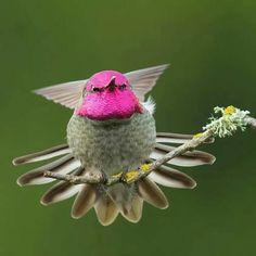 Birds, colorful birds, birds small birds, little birds, wild birds Tiny Bird, Small Birds, Little Birds, Colorful Birds, Pretty Birds, Beautiful Birds, Animals Beautiful, Hummingbird Photos, Exotic Birds
