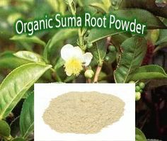 Raw Organic Suma Root Powder 4oz by Jubal Wild Harvast. $12.99. Sitosterol and stigmasterol: steroids that have been found to be beneficial to the heart and to aid in lowering cholesterol levels in the blood.. Many essential vitamins (e.g. vitamins A, B-1, B-2, E, K), minerals (e.g. iron, magnesium, cobalt, silica and zinc), amino acids and trace elements. Its high iron content may account for its traditional use for anemia.. Beta-ecdysterone: the main reason for...