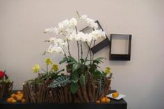 Artistic Display Shared in the Queensland Orchid Society Facebook Group and Potted Plant Society  https://queenslandorchid.wordpress.com/2014/05/18/artistic-display-shared-in-the-queensland-orchid-society-facebook-group-and-potted-plant-society/