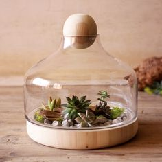 Glass and Wood Terrarium #planter #plant