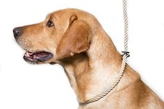 Dog & Field Deluxe Gundog Slip Lead (Natural Brown) Soft 8mm Spliced Marine Rope with Rubber Stopper - One Size Fits All and Suitable For All Breeds of Dog with 2 Colour Options (Natural)