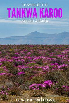 Flowers of the Tankwa Karoo National Park South Africa Kruger National Park, National Parks, Wildlife Safari, Slow Travel, Desert Plants, Holiday Destinations, Travel Destinations, Africa Travel, South Africa