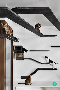 Cat Tree House, Cat House Diy, Cat Walkway, Cat Climbing Wall, Cat Wall Furniture, Furniture Stores, Cat Wall Shelves, Cat Hotel, Cat Playground