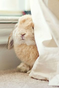 Soft and cuddly easter bunny