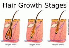 DIY Hair Growth Remedies ~ How To Use Garlic For Hair Growth, Are you stressed about hair loss that's out of control? Expensive salon treatments can do more harm than good to your hai Hair Growth Stages, Hair Growth Cycle, Hair Remedies For Growth, Home Remedies For Hair, Hair Loss Remedies, Garlic For Hair Growth, Regrow Hair Naturally, Hair Science, Hair Loss Treatment