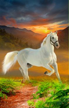 Beautiful Horse Pictures, Most Beautiful Horses, Animals Beautiful, Cute Animals, National Railway Museum, Majestic Horse, Horse Art, Wild Horses, Pet Birds