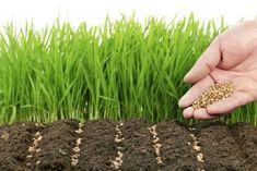 Компост, который сам растет и сам рыхлит Жизнь на нашей планете началась с растений и продолжается благодаря им. Вся органика живых существ – бывшие ... - Дача, сад и огород - Google+