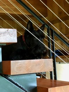 Scottie Dog, Fun Stuff, Stairs, World, Dogs, Home Decor, Fun Things, Stairway, Decoration Home