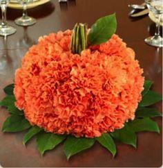 Carnation pumpkin