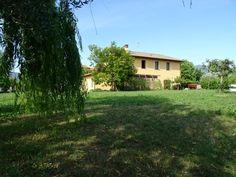 Vendita rustico singolo con terreno Pisa, Plants, Plant, Planting, Planets