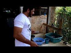 Cultivo de Orquídea, vaso e substrato - YouTube