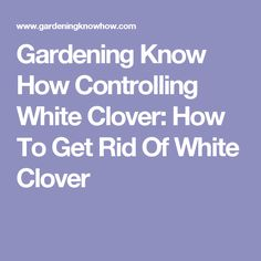 Gardening Know How Controlling White Clover: How To Get Rid Of White Clover Best Mulch For Garden, Garden Types, Zone 6 Plants, Iris Rhizomes, Growing Grass, Organic Mulch, Weed Control, How To Get Rid, Gardening Tips