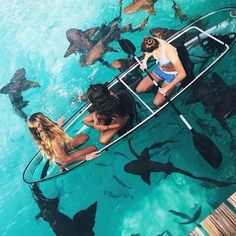 Friends-Transparent-Sea-Ocean-Sharks-Boat-Rozaap