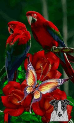 Very beautiful gif Beautiful Love Pictures, Beautiful Gif, Love Images, Beautiful Birds, Beautiful Flowers Wallpapers, Beautiful Rose Flowers, Beau Gif, Flowers Gif, Mosaic Pictures