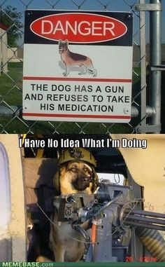 I Think the Purpose of the Sign has Been Accomplished - Funny pictures and memes of dogs doing and implying things. If you thought you couldn't possible love dogs anymore, this might prove you wrong. Dog Signs, Funny Signs, Funny Cats And Dogs, Funny Animals, Funny Puppies, Animal Funnies, Chihuahua Puppies, Animal Jokes, Koalas