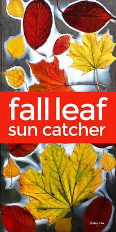 A lovely fall leaf craft for kids, these gorgeous fall leaf sun catchers to stick on classroom or homeschool windows are a wonderful way to explore fall colours and leaves with children. #fallcraftsforkids #fallcrafts #leafcraftsforkids #leafcrafts #autumncrafts #autumncraftsforkids #fallkidscrafts