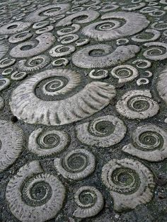 Fossil photo..would be cool to recreate as stamped concrete patio