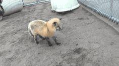 gifsboom:  Firefox has encountered a bug. [video]