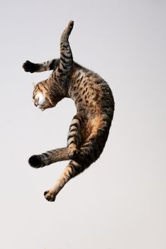 Now that is some move. www.superstarpetservices.com
