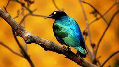 animais exoticos - Bing Imagens