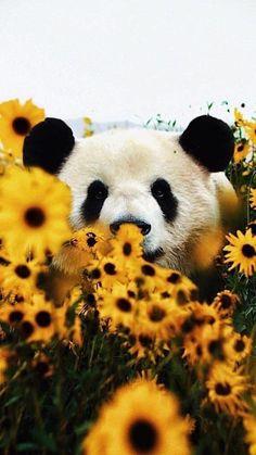 Cute Wild Animals, Baby Animals Super Cute, Baby Animals Pictures, Cute Little Animals, Cute Animal Pictures, Animals Beautiful, Funny Animals, Baby Farm Animals, Beautiful Sea Creatures