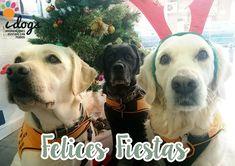 Os deseamos a tod@s unas felices fiestas.✨🎉✨🎉 #FelizNavidad #Navidad #FelizNavidad2017 #SonrisasQueDejanHuella #PerrosDeTerapia #Therapydogs #FelicesFiestas #Navidades