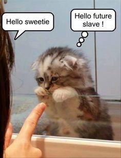 Hello future slave....