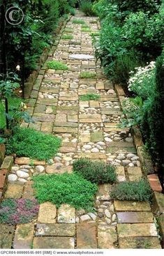 Wonderful mix of material for garden path. Cobblestone sectioned between random pattern of bricks (reclaimed bricks offer a softer mellow tone of age along with irregular edges) and plantings of different types of thyme. Bordered with bricks as well.