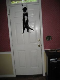 Hanging on the edge. http://getoutoftherecat.tumblr.com/post/3772341805/get-down-from-there-cat-that-is-not-how-you-open