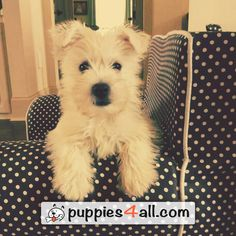 Learn more about your best friend today! http://puppies4all.com/ #dog #cute #puppy