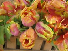 Fabulous Parrot Tulips!    How should they be Best Described? I'm going with Cirque Du Soliel!