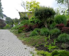landscaping-moss-and-grasses-against-turf-paver-driveway