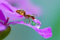 water drop on flower - Pesquisa Google