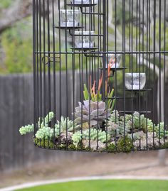 Succulent Birdcage Planter:  Stunning display !