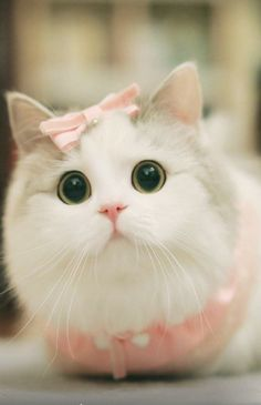 Trends For Very Cute Cats And Kittens Baby Animals Super Cute, Cute Baby Cats, Cute Cats And Dogs, Cute Little Animals, Cute Cats And Kittens, Cute Funny Animals, Kittens Cutest, Cute Animals Images, Cutest Animals
