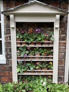 Garden Inspiration, Garden Ideas, Primula Auricula, Classic Garden, Primroses, Theatres, Back Gardens, Hydroponics, Garden Planning