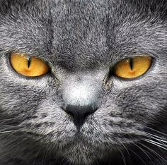 Beautiful Amber eyes!