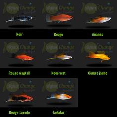 Variétés de xipho http://www.aquachange.fr/Boutique/poissons-aquarium/14-xipho.html                                                                                                                                                                                 More