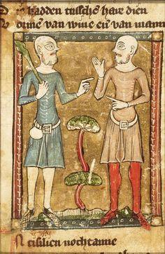 The Hague, KB, KA 16, f.43r. Jacob van Maerlant, Der Naturen Bloeme. Flanders; c. 1350