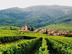 Aperçu des paysages Alsaciens. Le milieu viticole est très présent dans cette région ainsi vous pourrait découvrir tous leurs secrets de fabrications et paysages superbes. #alsace #france