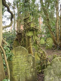 Tree Roots and Tombstones (Highgate).  Idea for tombstone shape