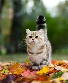 Fluffy cat in the leaves. kittens