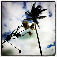 Open sky, pretty flowers; nature sure is lovely ^^