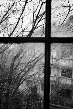 Wild Windy Weather http://distinguishedcompany.tumblr.com/