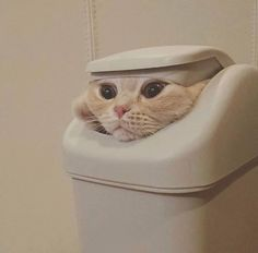 Epic Game of Thrones Scene Immortalized By Cat Memes! - World's largest collection of cat memes and other animals Cute Funny Animals, Funny Animal Pictures, Cute Baby Animals, Funny Cute, Funny Photos, Humorous Animals, Cute Cats Photos, Fluffy Animals, Cute Kittens