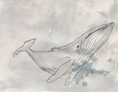 onethreethree: Brodie Davies water colour humpback whales