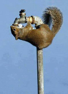Thirsty squirrel! Faucet, Christmas Ornaments, Holiday Decor, Squirrels, Home Decor, Chipmunks, Xmas Ornaments, Homemade Home Decor, Christmas Lawn Decorations