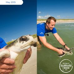 This A SeaWorld Rescue Team member gives a huge grin as he returns a rescued sea turtle to its ocean home! #365DaysOfRescue