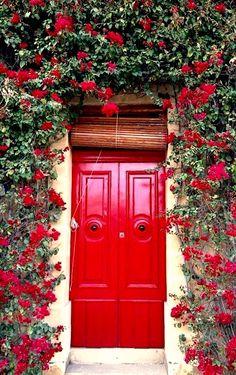 Red door with climbing rose bush in Marsaskala, Malta, Europe.